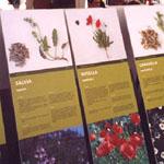 plantes-remeieres