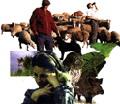 l'home i els animals